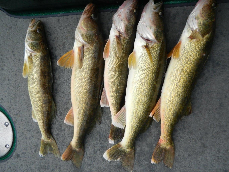 Lake Winnebago Fishing Report 9-17-14, Plus Lake Michigan Harbors